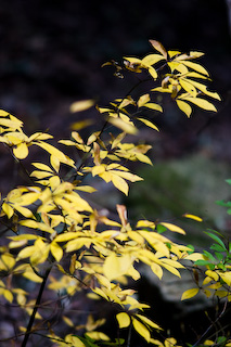 leaf01s.jpg